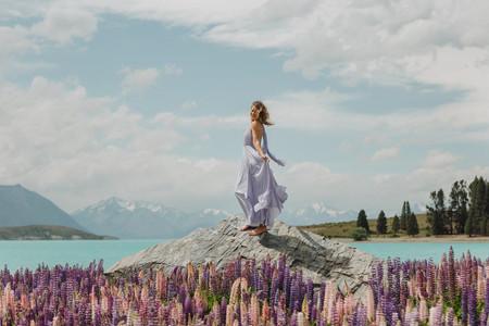 Lupin photos at Lake Tekapo in New Zealand