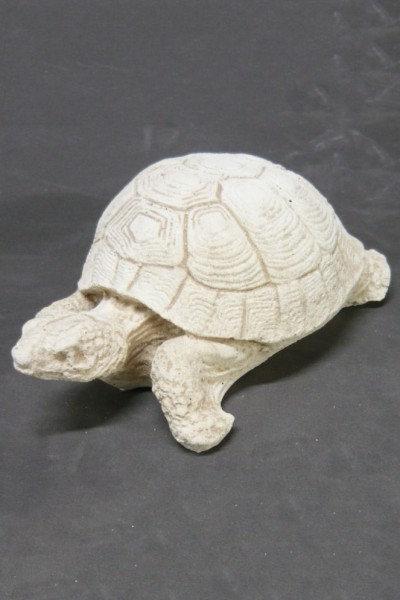 Tortoise – Medium