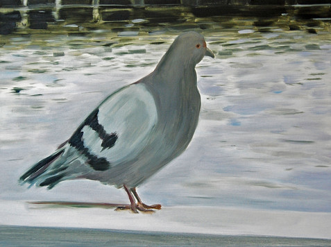 Pigeon, oil paint on canvas, 20 x 30 inches