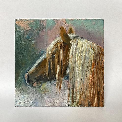No.11 Tricolour Pony