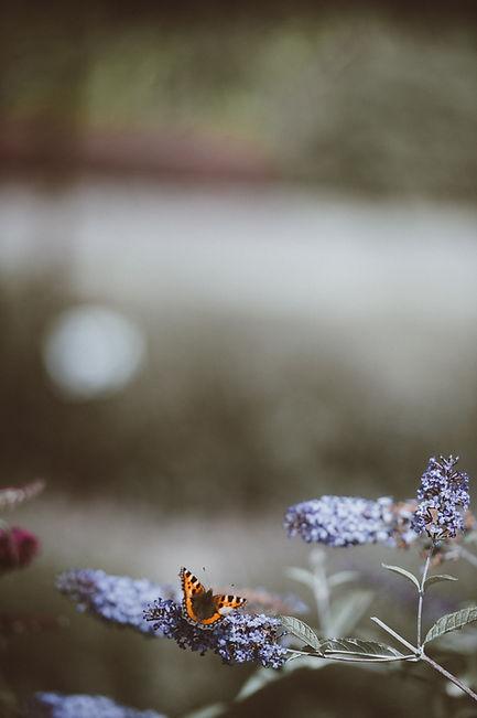 fjäril2.jpg