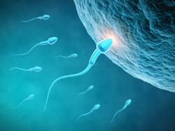 Fertility reflexology
