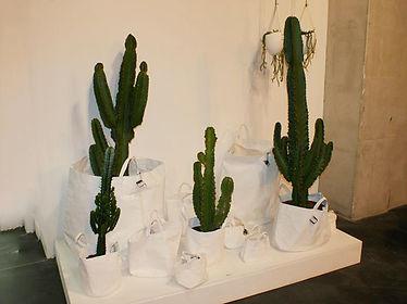 cactus,fleuriste,auxerre