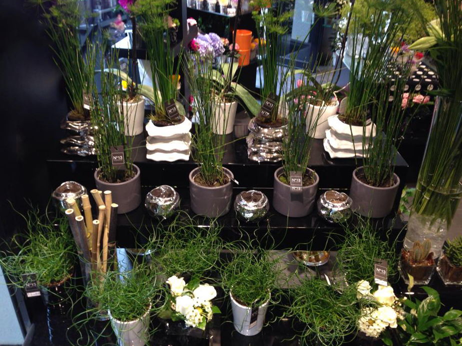 cache-pot,fleuriste auxerre,plantes.jpg