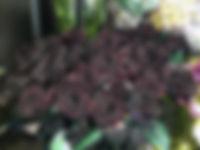 roses noires auxerre yonne livraison fleurs