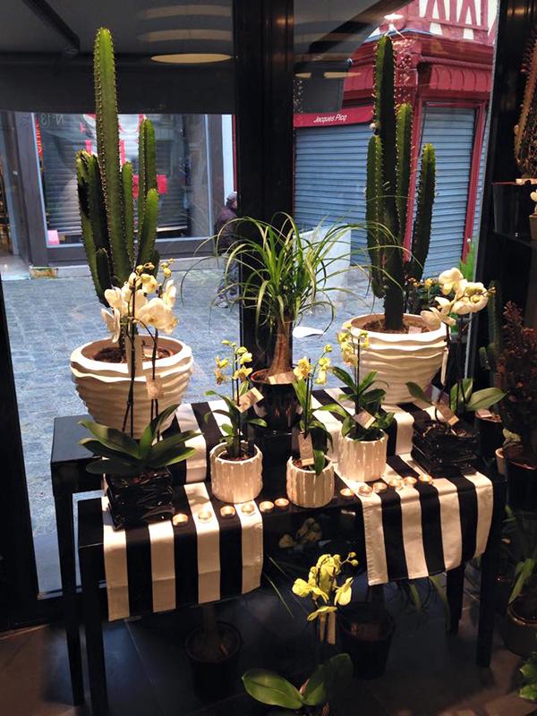 cactus-auxerre-yonne-fleuriste.jpg