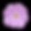 kisspng-cosmos-bipinnatus-flower-stock-p