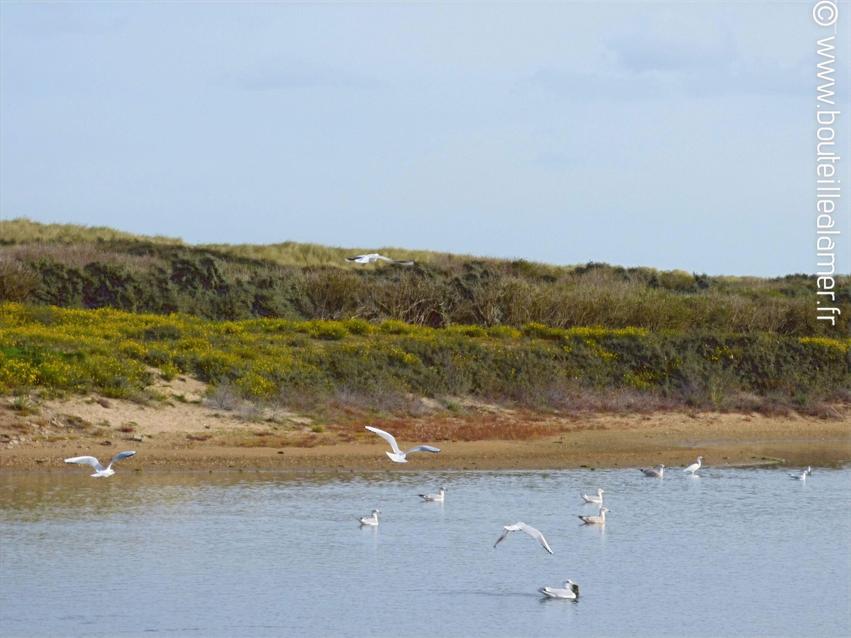 The Platier d'Oye dunes