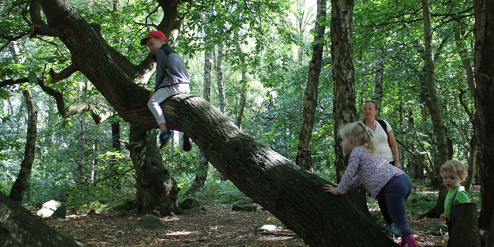 Family Forest School and picnic (all ages)