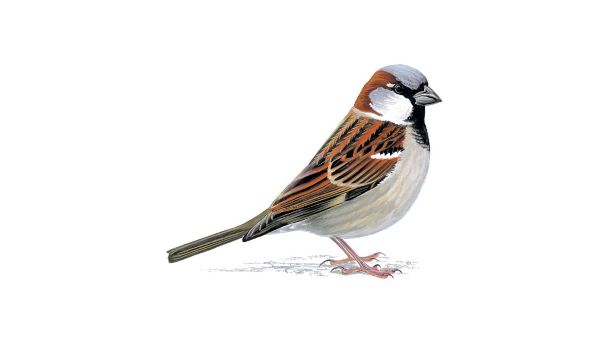 Поздравления днем, картинка птицы для детей на прозрачном фоне