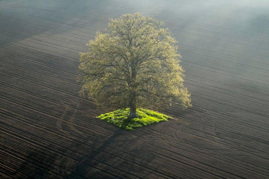nos-racines--pascal-bourguignon-940x627.