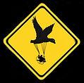 paramoteur et canard oiseau