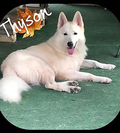 THYSON.webp