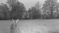 Wildlife at Garthside