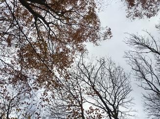 2018_9.nov Tur i Marselis skoven -2.JPG