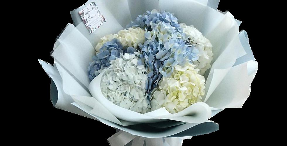 White & Blue Hydrangeas