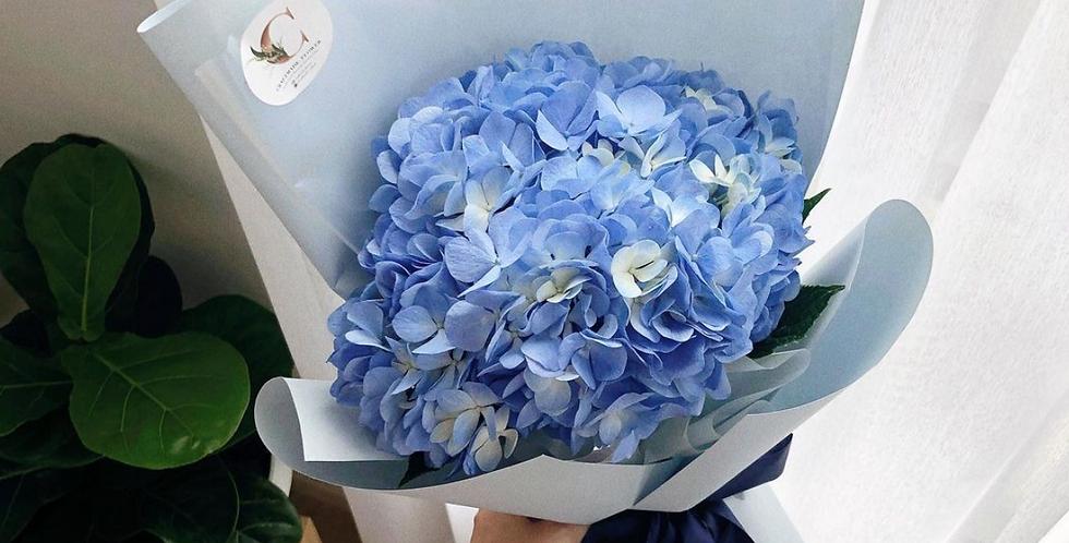 1 Blue Hydrangea