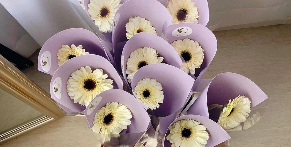 White Gerbera (Min. 5 Bouquets)