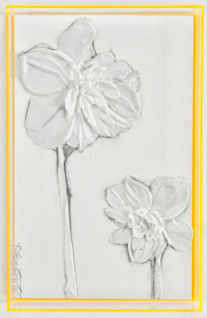 Orange Daffodils