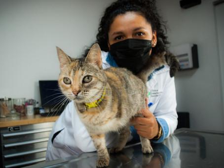 Adopción de mascotas en Nicaragua: ¿Cuáles son los pasos?