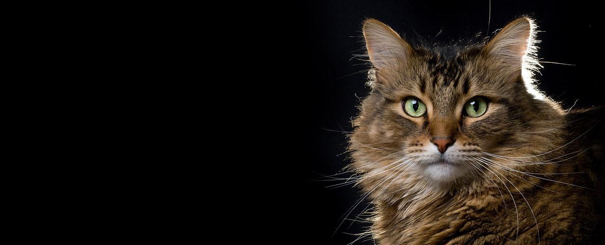 Gato Negro Nosotros.jpg