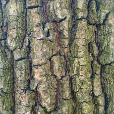 Tree bark 04 - 2160x2160
