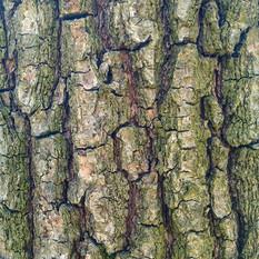 Кора дерева 04 - 2160x2160