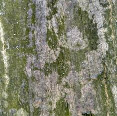 Кора дерева 01 - 3840x2160