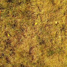 Old grass 3840x2160