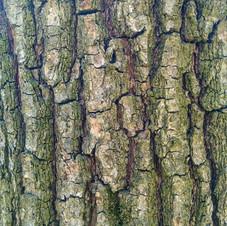Tree bark 05 - 3840x2160