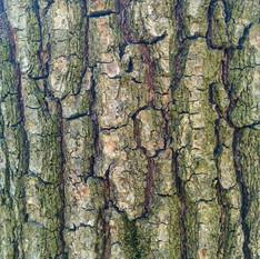 Кора дерева 05 - 3840x2160