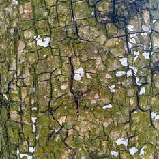 Кора дерева 02 - 3840x2160