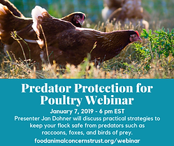 Predator protection poultry.png