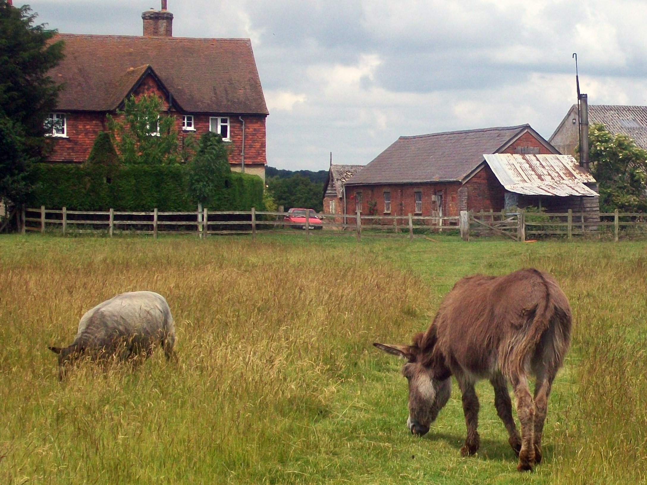 Guardian Donkeys - Pros and Cons | Janet Vorwald Dohner