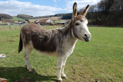 The Other Livestock Guardians: Llamas and Donkeys