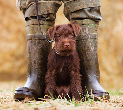 What is a Farm Dog? Making the Best Choices for Working Partners on the Farm or Ranch.