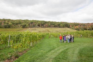 Valley Wine Tours - 1.jpg