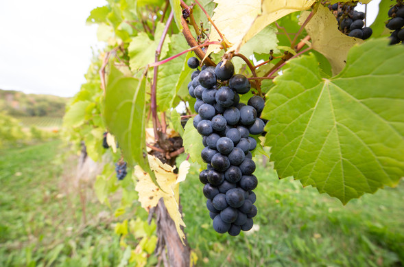 Valley Wine Tours-5 2.jpg