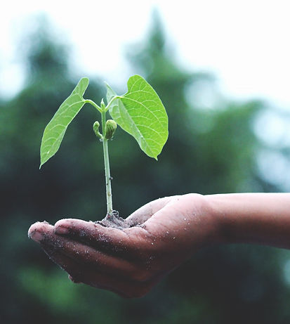 Canva - Person Holding A Green Plant_50