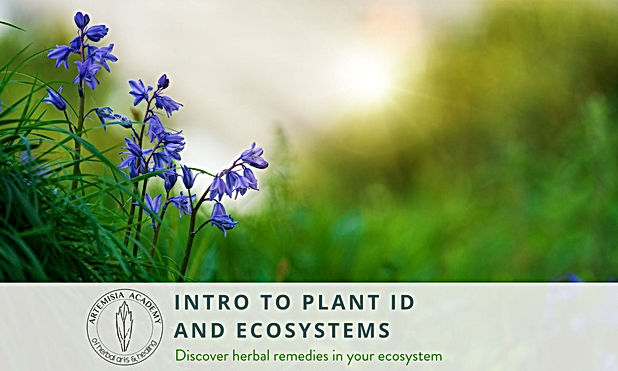 6 - Plant ID.jpg