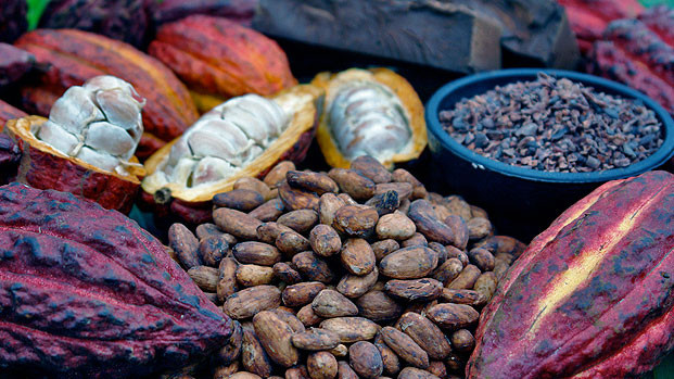 Cacao Bean Fèves de Cacao