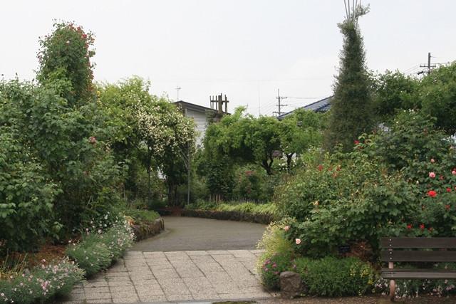 2017年5月25日 中野市一本木公園