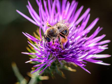A biodiversidade na Quinta dos Ingleses