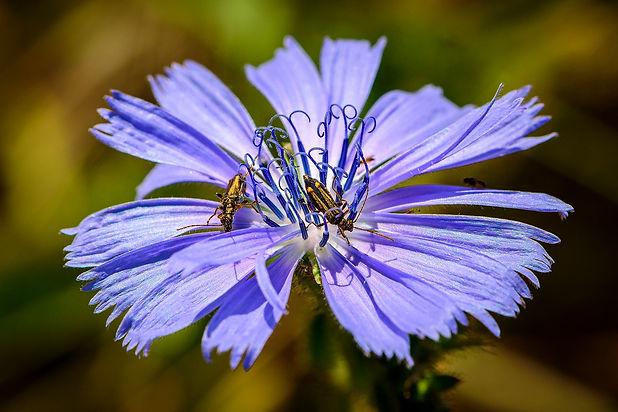 Fauna e flora na Quinta dos Ingleses