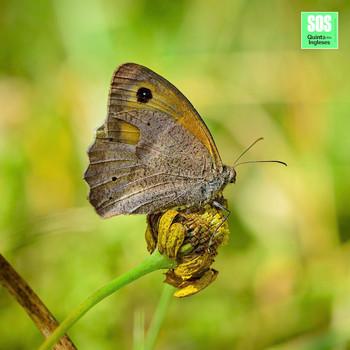 SOS Quinta dos Ingleses_Biodiversidade_2