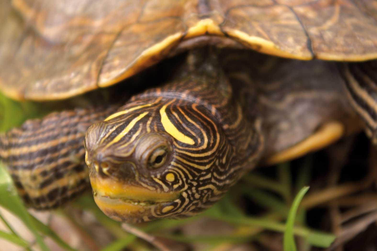 Centro de reproducción de tortugas