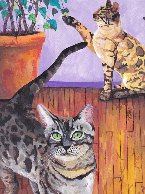Bengals cats
