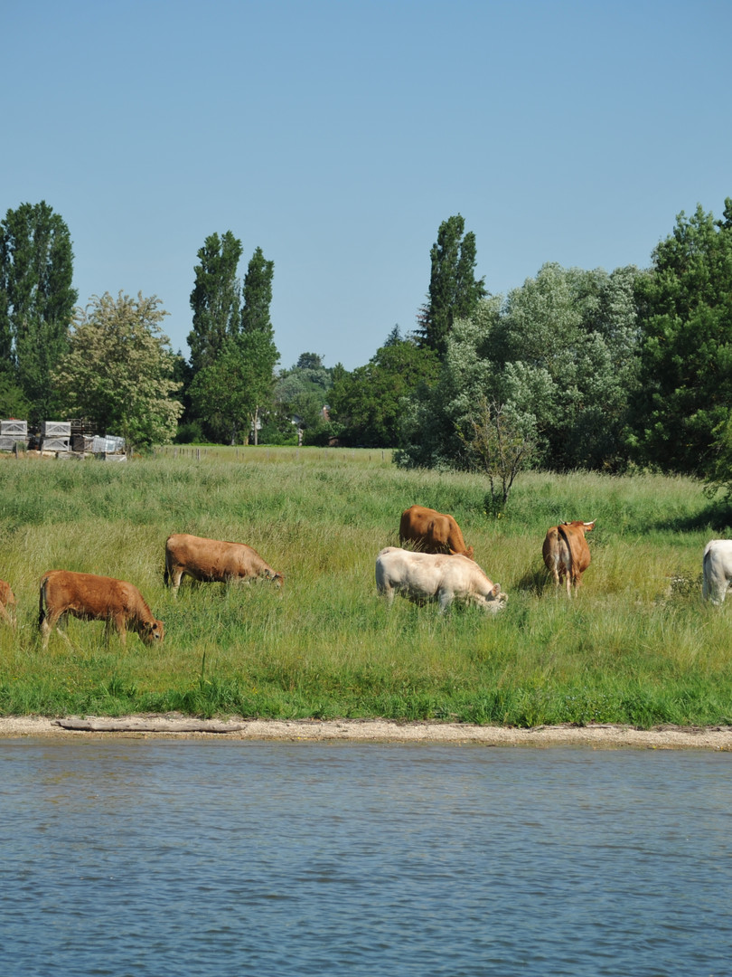 Fernfahrt Petite Saône