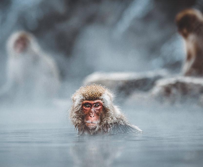 Baignade Monkey