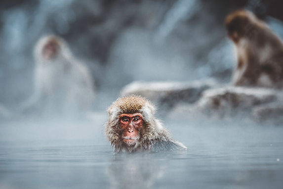 Baño del mono